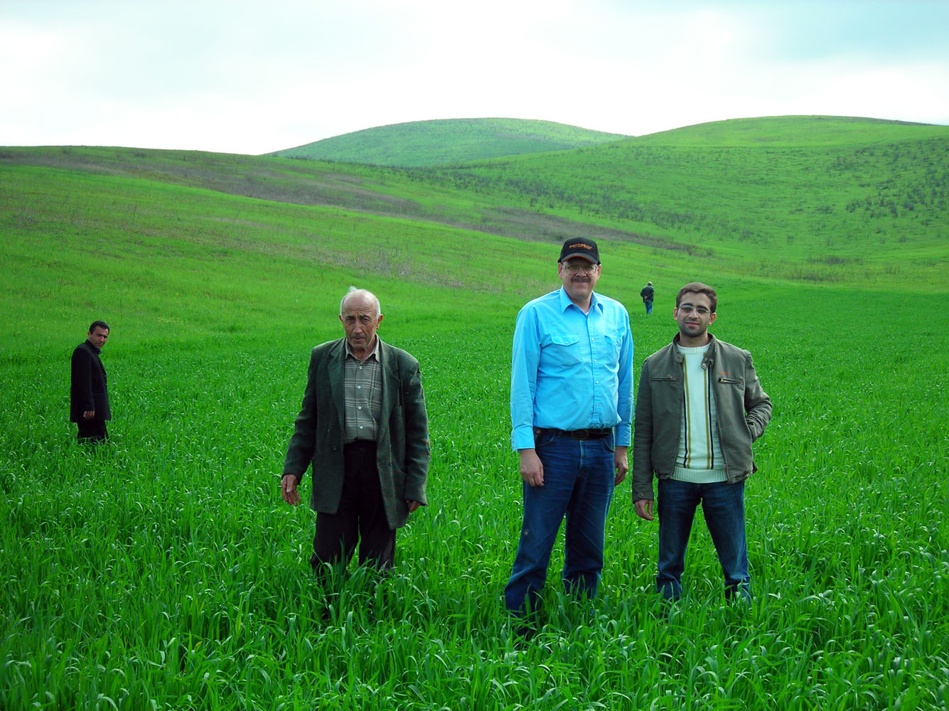 Helping farmers grow wheat puts bread on the table, Armenia.